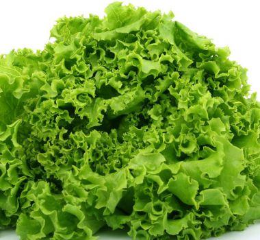 新鲜优质叶生菜